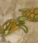 Matcrete Sea Turtle Border